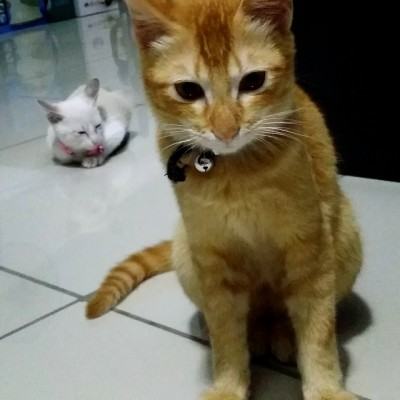 Toby & Mori